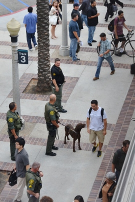 "Orange County Sheriff's deputies with a K-9 check out the passengers exiting a train at the Fullerton Train Station on July 10. The man in black's uniform said ""Counter Terrorism Team."" Afterward, they boarded the train."